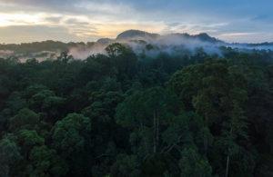 Convido Corporate Housing sponsors The Rainforest Trust
